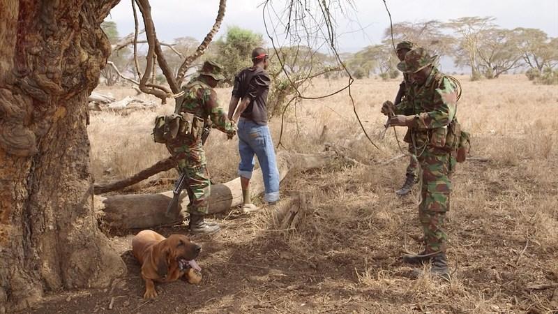Daily training to intercept poachers at Lewa Conservancy.