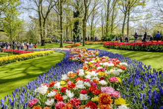 Dutch Design in Flowers at the Keukenhof Opening
