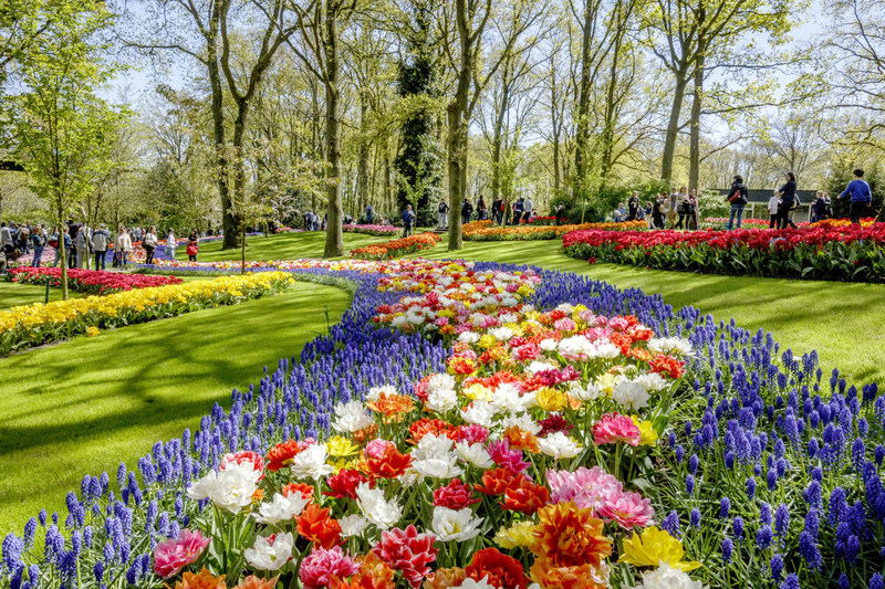 Dutch Design in flowers at the Keukenhof opening (PRNewsFoto/Keukenhof)