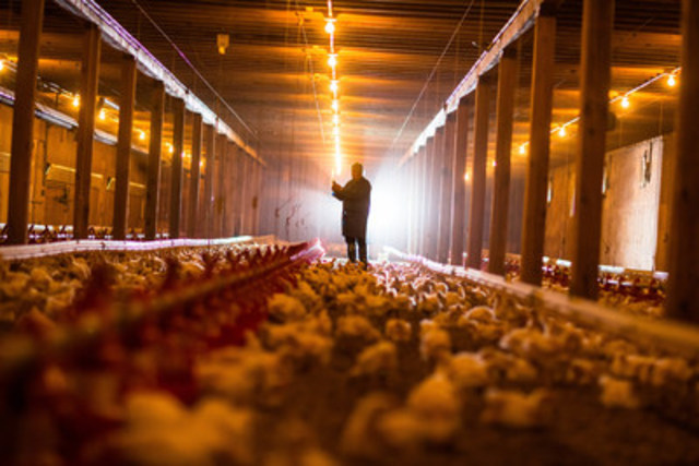 New Brunswick chicken farmer (CNW Group/Chicken Farmers of Canada)