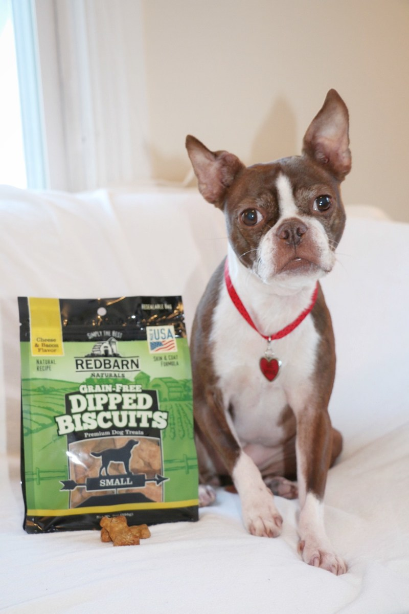 Redbarn Dipped Biscuits as Enjoyed by Bean the Boston Terrier