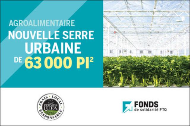 Plants de céleri dans la nouvelle serre urbaine de 63 000 pi2 des Fermes Lufa à Anjou (Québec) (Groupe CNW/Fonds de solidarité FTQ)