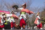 Subaru of America Celebrates The Return of Spring as The 2017 Cherry Blossom Festival Title Sponsor