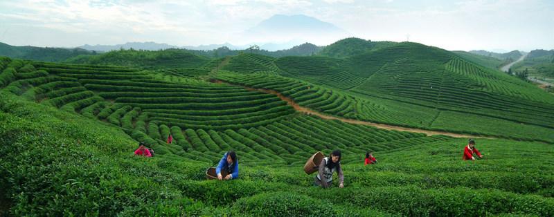 Hometown of Tea: Longjing Village in Hangzhou
