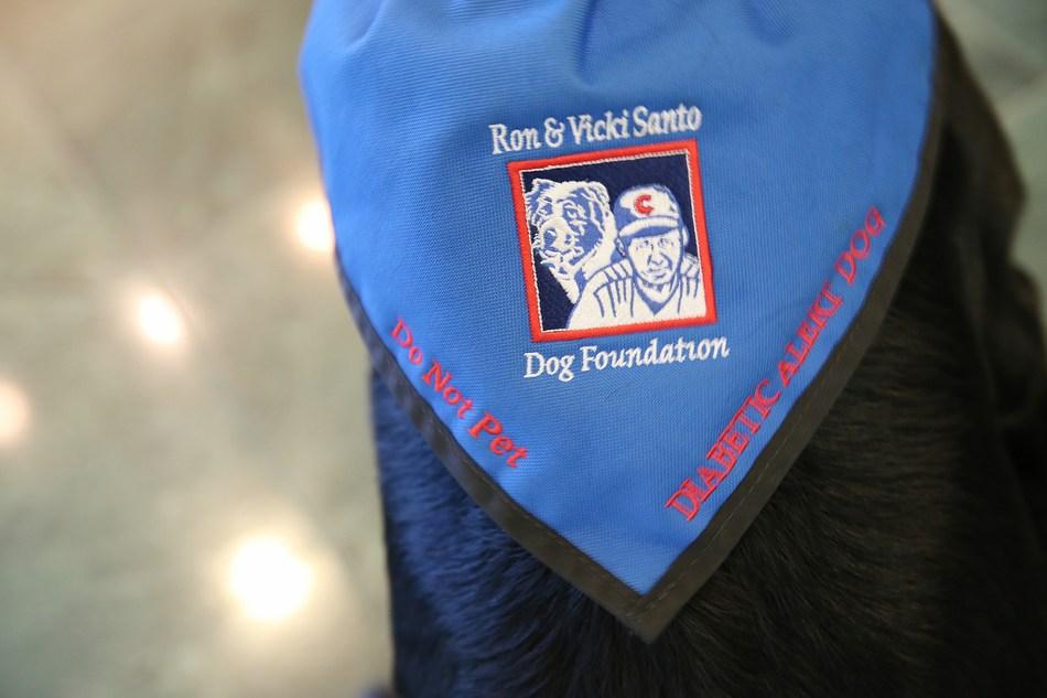 "Service dog ""Pickles"" scarf."