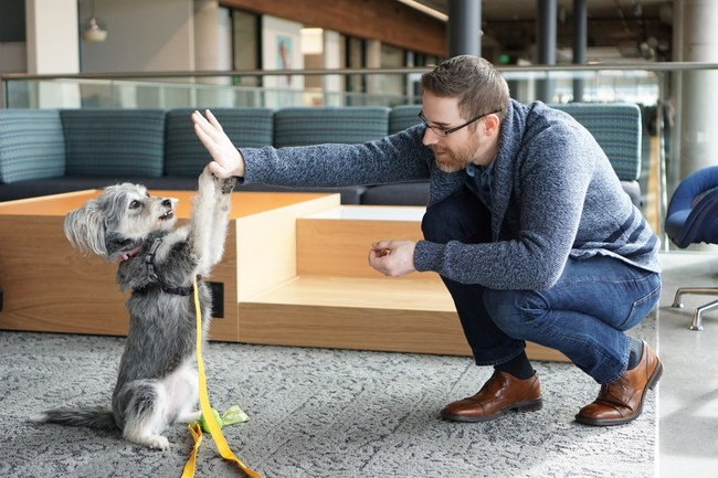 Pet-friendly workplaces and other pet-related benefits have a positive impact on employees, according to more than two-thirds of employees and HR decision makers. (Photo Alison Pate/Banfield Pet Hospital)