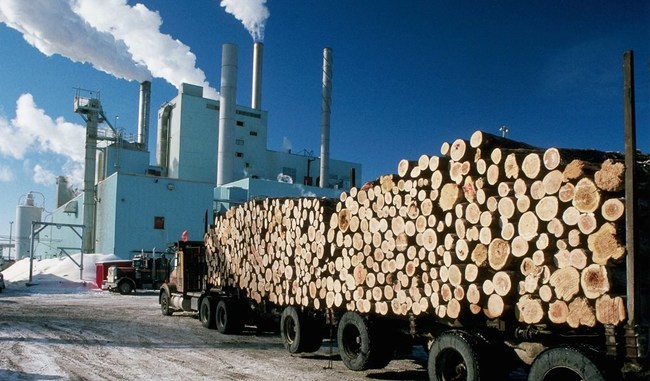 Mesothelioma Pulp & Paper Mill