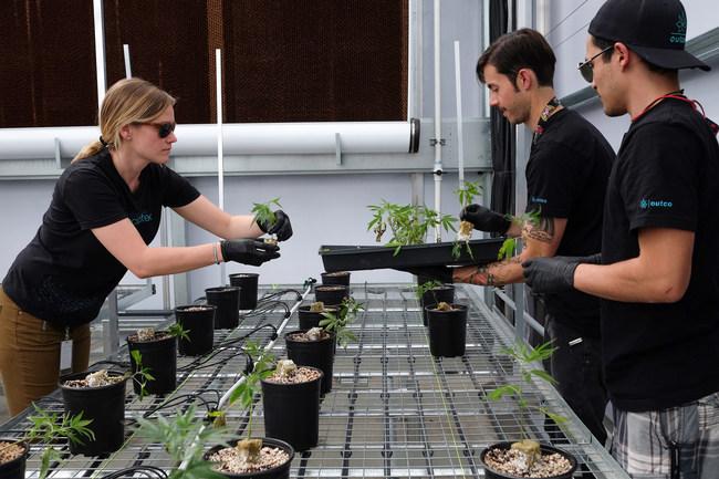 OutCo Greenhouse