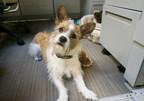 Petco Celebrates National Pets @ Work Day