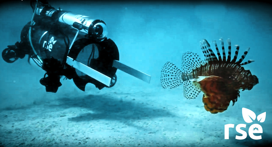 RSE Guardian LF1 approaches an invasive lionfish prior to stunning and capturing the fish. Designed to cost less than $1000 and go below sport diver depth down to 400 feet, the Guardian LF1 fully functioning prototypes can stun and collect up to ten lionfish before returning to the surface.