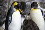 Happily ever after on World Penguin Day in New Zealand