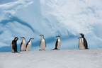 Pew: Urgency Grows for Network of Protected Areas Off Antarctica