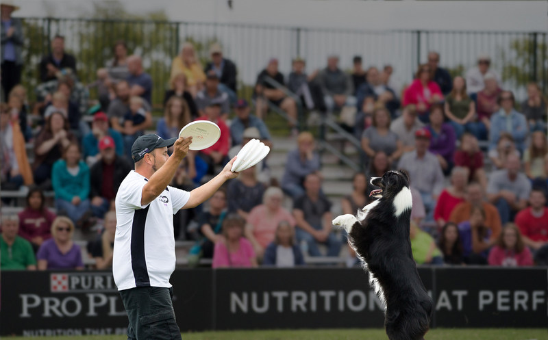 Purina Pro Plan Incredible Dog Challenge Dog and Owner