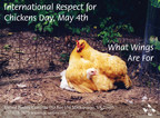 International Respect For Chickens Day Celebrates Compassion for Chickens