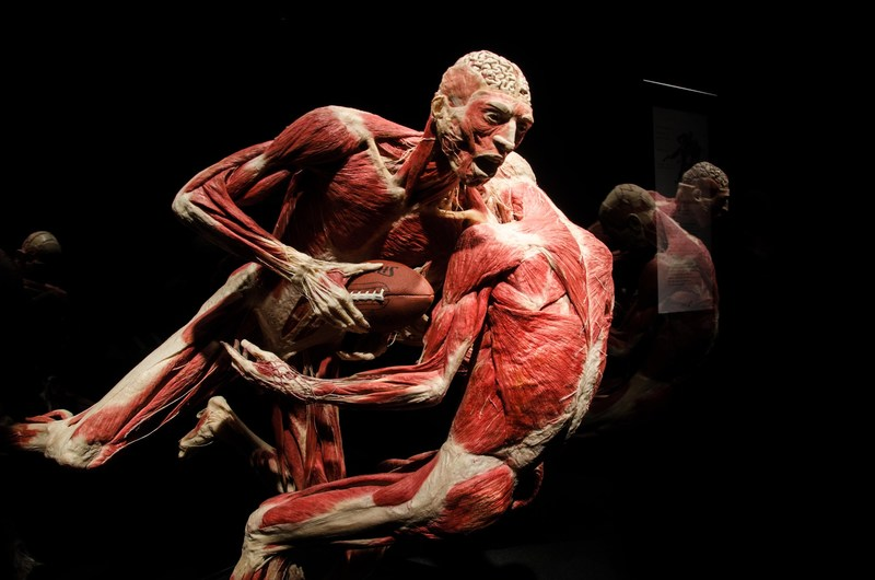 In response to popular demand, the California Science Center is proud to open Dr. Gunther Von Hagens' latest exhibition, BODY WORLDS: Pulse on May 20, 2017. The exhibition provides an opportunity to learn about human anatomy, physiology and health. Through the authenticity of the specimens on display, we experience the wonder of the real human body and marvel at its elegance and complexity. For more information, please visit https://californiasciencecenter.org/exhibits/body-worlds-pulse.