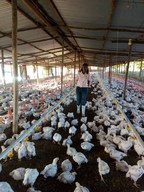 AgDevCo Invests in Tanzanian Poultry Business