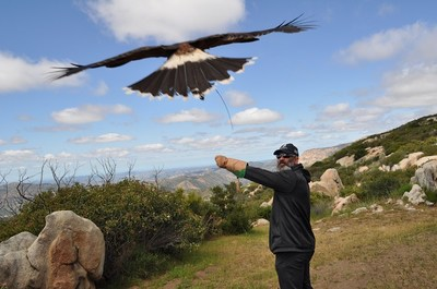 Wounded Warrior Project veterans learned about falconry and camaraderie at a recent event on a California mountaintop.