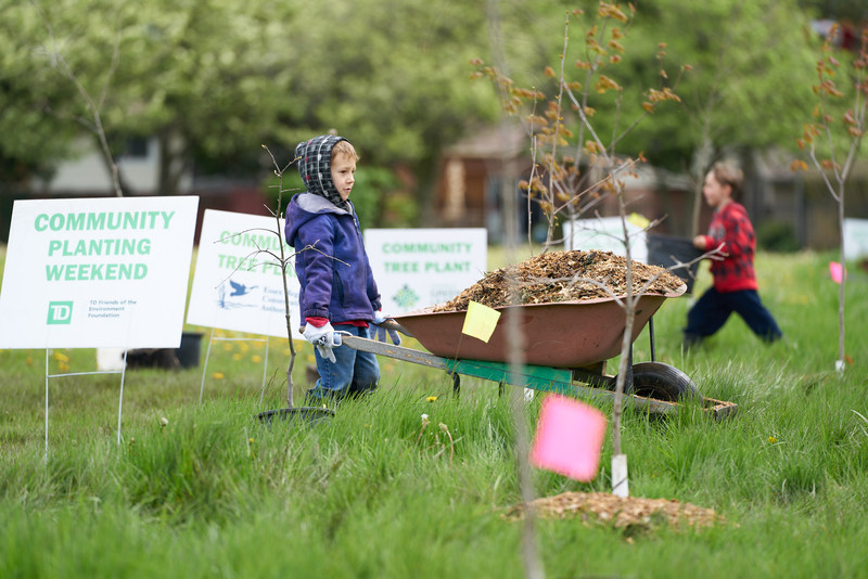 In Windsor, volunteers planted more than 80 trees that will be counted towards Ontario's Green Leaf Challenge. (CNW Group/Forests Ontario)