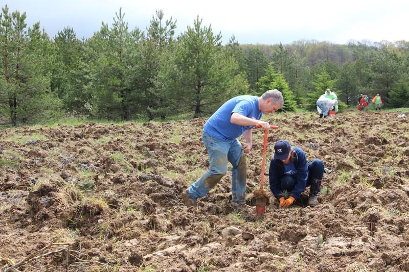 S&T Bank, a full-service financial institution with assets of $7.1 billion, and locations in Pennsylvania, Ohio, and New York, pledges to donate a portion of the seedlings to be planted during Plant a Tree at Flight 93, for the second consecutive year. The two-day volunteer event will take place at the Flight 93 National Memorial on May 19 and 20, 2017.