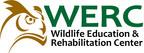 W.E.R.C. Welcomes San Diego Bobcat Kittens