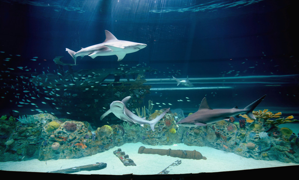 Caribbean Journey, opening May 13 at the Texas State Aquarium in Corpus Christi is a $58 million expansion, doubling the size of the attraction and completely immersing guests in the flora and fauna of the Caribbean Sea.