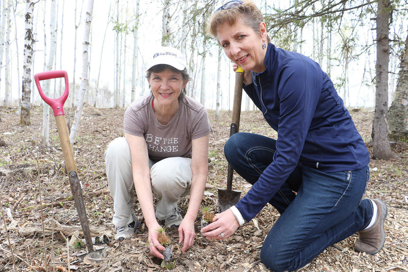 Today in Sudbury more than 300 volunteers of all ages planted more than 10,000 trees. All trees planted through Forests Ontario's Community Planting Event will be counted towards Ontario's Green Leaf Challenge. (CNW Group/Forests Ontario)