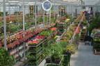 Le nouveau Jardin Hamel est maintenant ouvert au public et devient le centre jardin le plus moderne au Québec. Les nouvelles serres, d'une superficie de plus de 50 000 pieds carrés, regroupent une plus grande quantité de fleurs, de plantes et d'arbustes pour la clientèle. (Groupe CNW/Jardin Hamel)