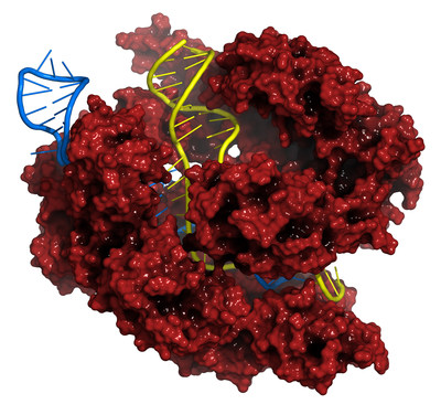 Merck has developed an alternative CRISPR genome editing method that advances new possibilities for research, creating a way to rapidly deploy newly discovered bacterial CRISPR systems in disease-specific applications