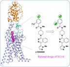 Shanghai Scientists Decipher the Multi-domain Full Length Structure of the Human Smoothened Receptor