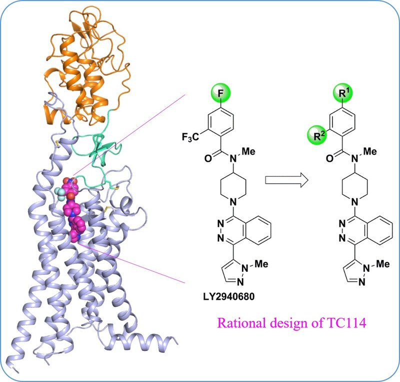 Structure of multi-domain human Smoothened receptor, an important drug target for cancers.