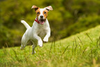 Farmers Insurance® & Pets Best Reveal Top Springtime Pet Claims