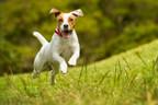 Farmers Insurance® & Pets Best Reveal Top Springtime Pet Claims