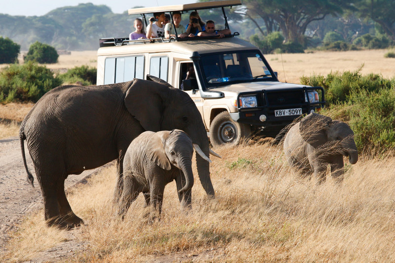 Brickell Travel Management's top-seller are African safaris.