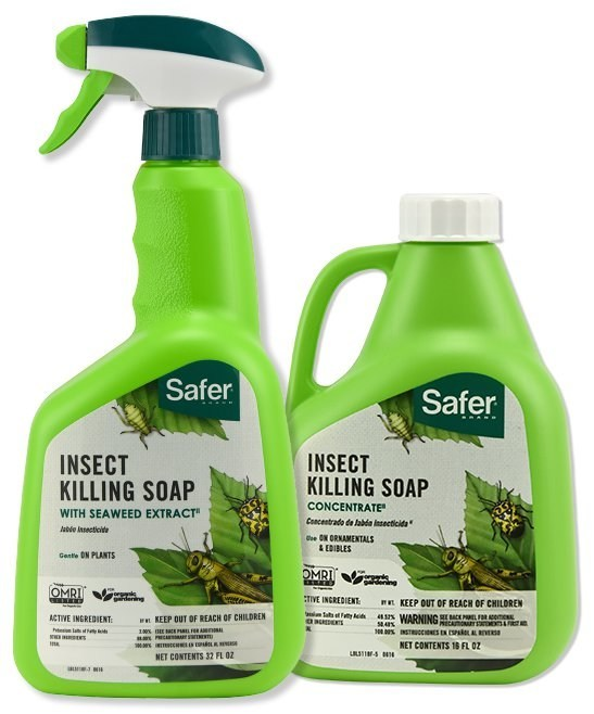Safer® Brand's insecticidal soap pioneered alternative pesticides in the United States' consumer market (by being the first uniquely formulated insecticidal soap available to consumers) and remains one of the most popular organic gardening insecticides.  Empties of this product as well as the rest of Safer® Brand's product offering are available upon request.