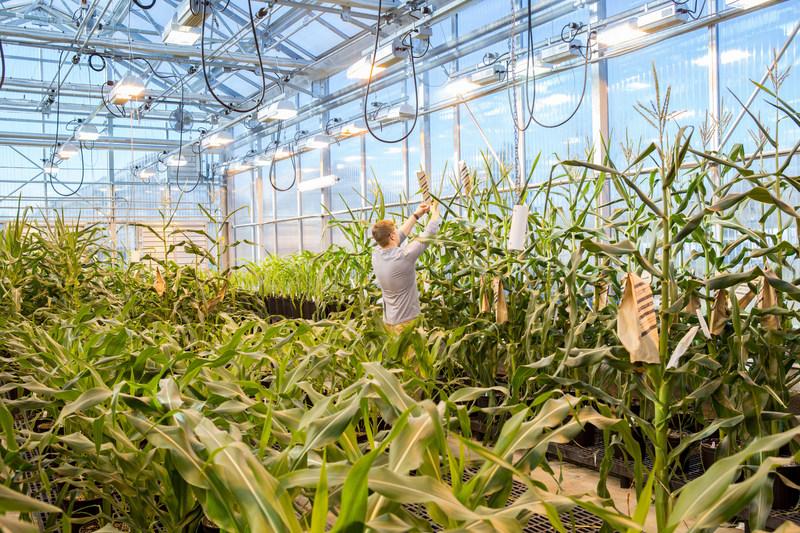 (PRNewsfoto/Benson Hill Biosystems)