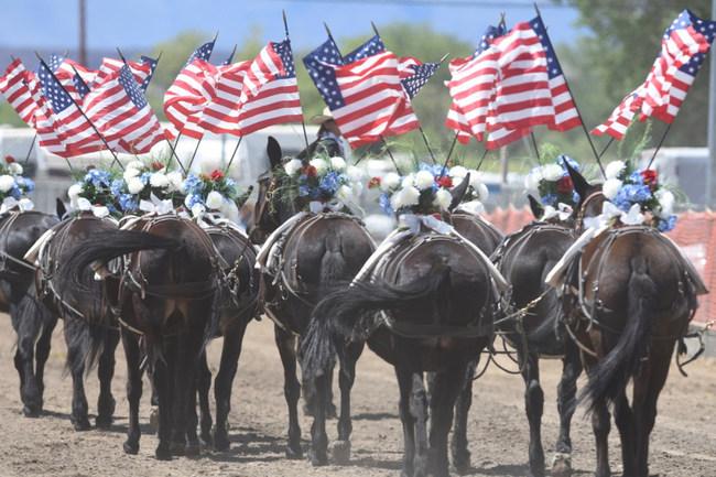 Mule Days Festival