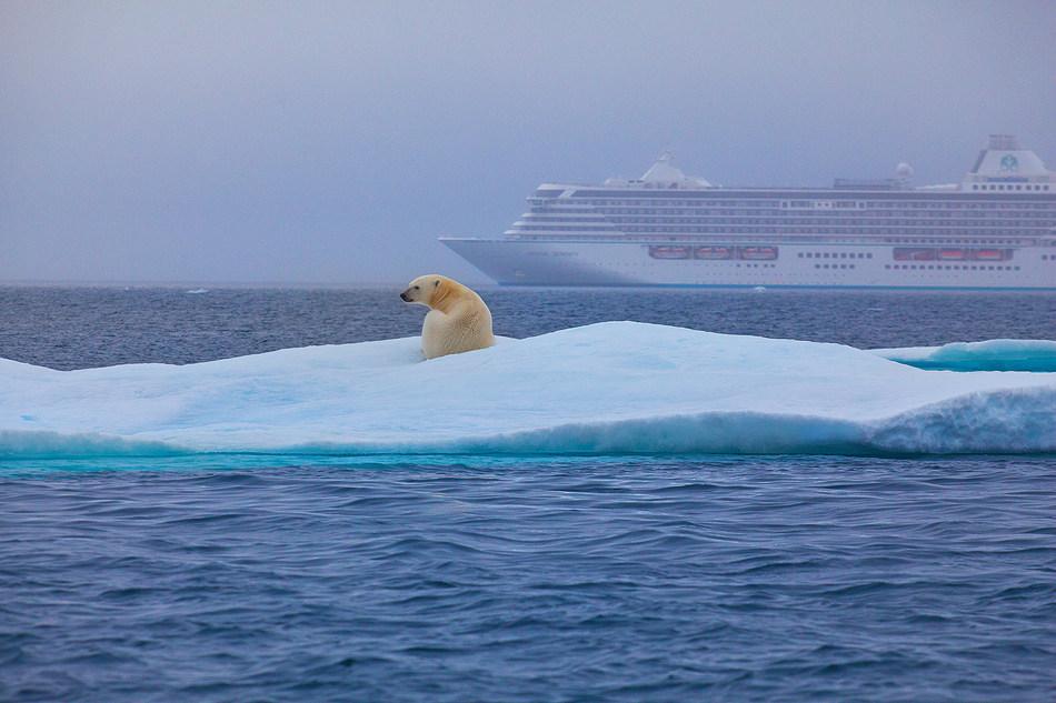 Polar Bear along Northwest Passage. PHOTO CREDIT: Neil Roberts, Paragon Pixels