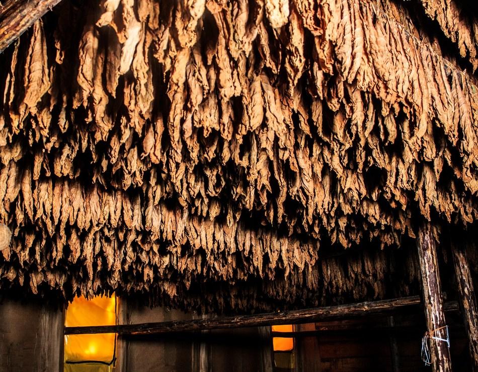 ODAG Factory_3_Tobacco