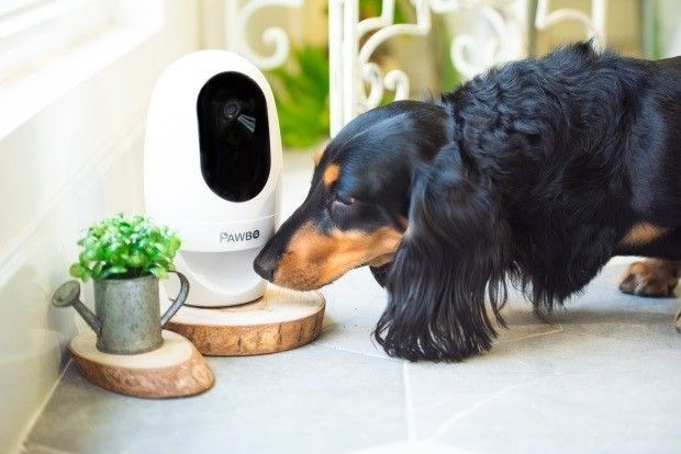 PAWBO: Acer's Pet Tech Offering Set to Boost Pet Wellbeing in UK (PRNewsfoto/PAWBO)
