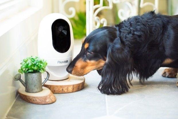 PAWBO: Acer's Pet Tech Offering Set to Boost Pet Wellbeing in UK (PRNewsfoto/PAWBO)