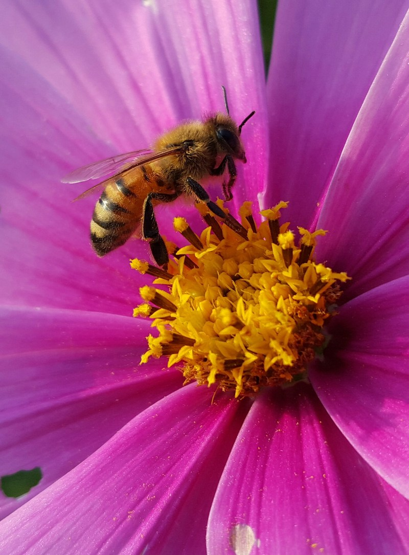 Today's report of honey bee colony losses from the Bee Informed Partnership (BIP), in collaboration with the Apiary Inspectors of America (AIA) and the U.S. Department of Agriculture (USDA) provides welcome news for beekeepers.