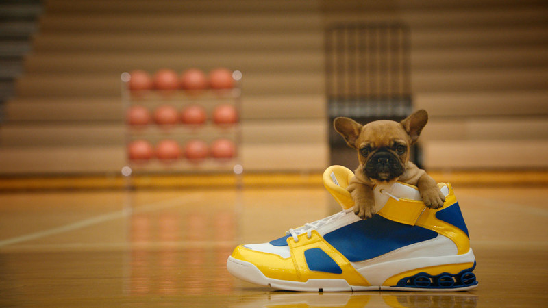 Canines on the Court