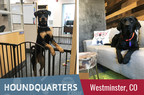 Camp Bow Wow Designs New Colorado Headquarters to Amplify Its Dog-Friendly Policy Amid Growth