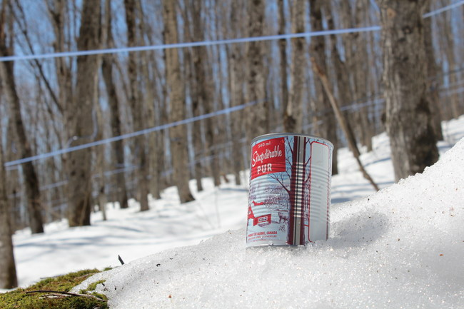 This spring, Quebec's 13,700 maple syrup producers harvested a record 152,2 million pounds of maple syrup (CNW Group/Federation of Quebec Maple Syrup Producers)