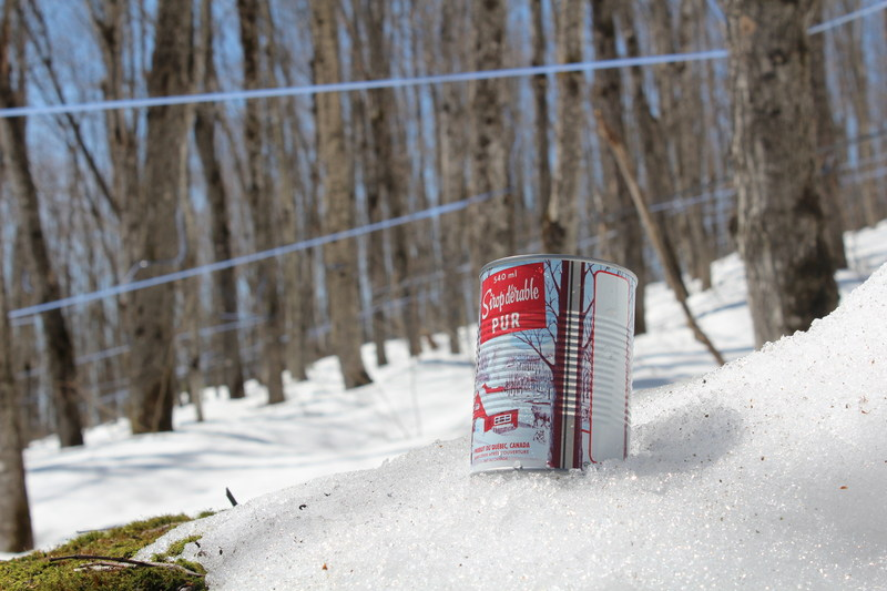 Ce printemps, les 13700 acériculteurs du Québec ont réussi à récolter un record de 152,2 millions de livres de sirop d''érable (Groupe CNW/Fédération des producteurs acéricoles du Québec)