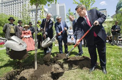 Le maire de Montréal Denis Coderre plante un arbre au centre-ville de Montréal pour célébrer le 150e anniversaire du Canada dans des communautés à travers le pays. (Groupe CNW/La Compagnie des chemins de fer nationaux du Canada)