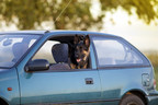 There is never a good excuse for leaving your pet unattended in a vehicle.  On hot days, it only takes a few minutes to cause serious harm to your pet. (CNW Group/Canadian Animal Health Institute)