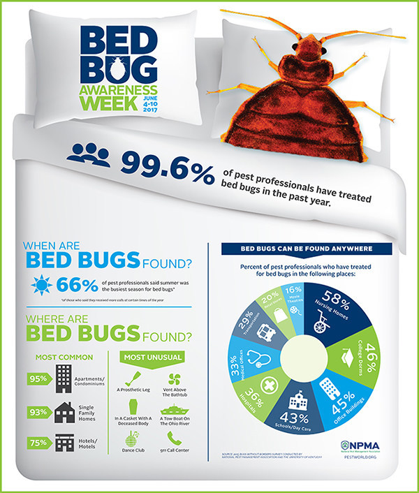 Infographic about the most common and most unusual places bed bugs can be found.