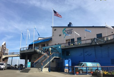 Aquarium of the Bay is located at PIER 39 along San Francisco's iconic waterfront. Photo Credit: Jeanne Mai