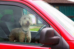 Never leave your pet unattended in a parked car for any period of time.